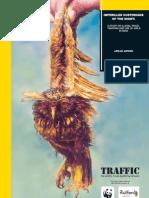 Traffic Species Birds12