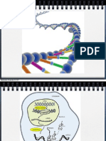 DNA Structure, Mitosis and Meiosis CiBi I