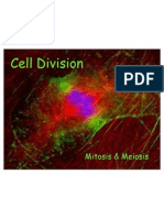 Cell Division Mitosis Meiosis 1225581257073362 9