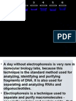 Student Principles of Gel Electrophoresis