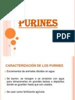 Presentacion Purines