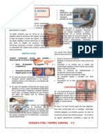 Alteraciones Del Sistema Digestivo (Autoguardado)-1