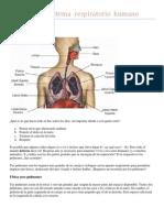 Imagen Del Sistema Respiratorio Humano