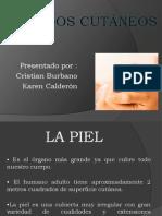 1SENTIDOS CUTÁNEOS SENSACION 1