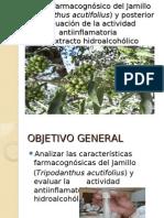 Análisis farmacognósico del Jamillo