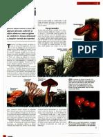 Animale Si Plante - Fungii