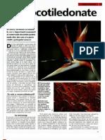 Animale Si Plante - Monocotiledonate