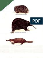 longman's  encyclopedia- mammals