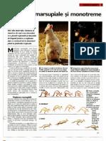 Animale Si Plante - Mamifere Marsupiale Si Monotreme