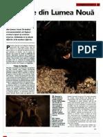 Animale Si Plante - Maimute Din Lumea Noua