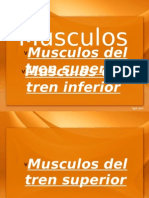 MUSCULOS!