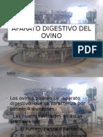 Aparato Digestivo Del Ovino