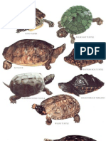 longman's encyclopedia- reptiles