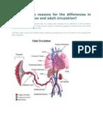 Fetal Circulation and Adult Circulation