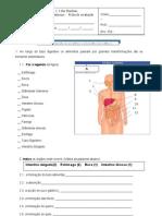 teste sist digestivo