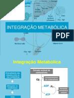 Integrasção Metabólica -2011