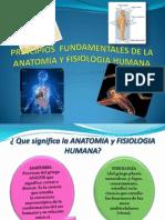 PRINCIPIOS  FUNDAMENTALES DE LA ANATOMIA Y FISIOLOGIA HUMANA