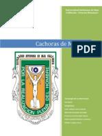 Cachoras de Mexicali PDF