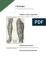 Anatomía y fisiologia