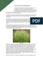 A PRODUÇÃO DE MEL E AS PLANTAS MEDICINAIS