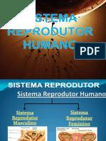 reproduohumana-110323193056-phpapp01