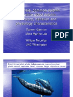 Pilot whale, common dolphin and white-sided dolphin life history, behavior and physiology characteristics