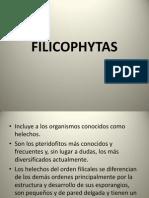 FILICOPHYTAS