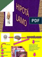 HIPOTALAMO p