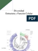 Divers Id Ad y Estructura-funciÓn