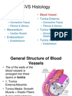 CVS Histology