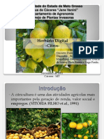 Herbário Digital_citrus