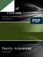 Flora of Chakrata