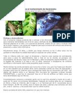 Guía para el mantenimiento de Dendrobates