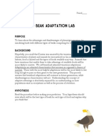 Bird Beak Adaptation Lab