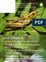 Generalidades de la Orden Orthoptera