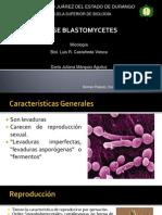 Blastomycetes