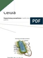 Celulas Procarienta y Eucarionta