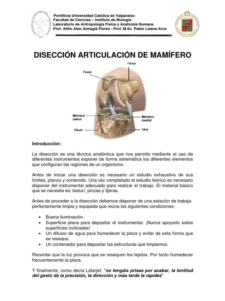 Hermosa Anatomía Sin Bisturí Ideas - Imágenes de Anatomía Humana ...