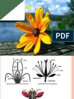 Anatomia Da Flor