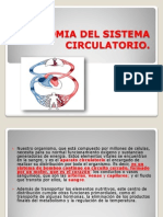 Anatomia Del Sistema Circulatorio