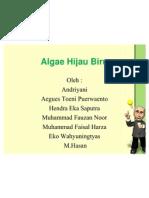 Algae Hijau Biru