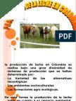 producciondelecheencolombia-100710091136-phpapp02