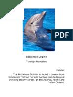 Bottle Nose Dolphin Nigel Project
