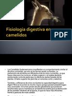 Fisiologia Digestiva en Camelidos 2