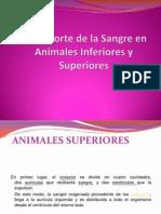 Animaless Superiores e Inferiores