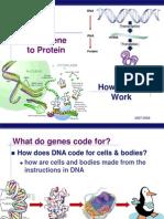 Gene to Protein(KFogler)