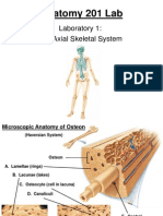 Laboratory 1 Axial Skeletal System