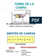 2.-anatomia-de-la-cabra