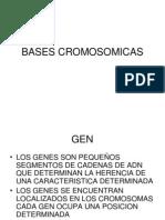 BASES CROMOSOMICAS