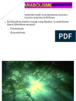 Metabolisme Fotosintesis